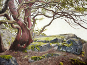 "Arbutus 36"" x 48"" (oil)  Sold"