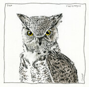 "Owly  5x5"" (Ink, graphite and coloured pencil)"